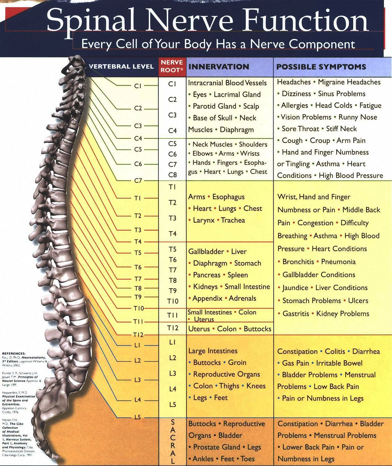 Spinal Nerve Chart2